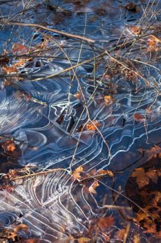 Late Autumn Ice by joannchilada