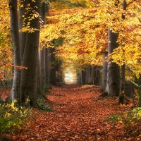Groovy Autumn Melodies by Oer-Wout