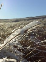 Ice Crystals by futuresmiles