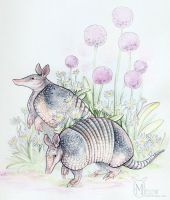 Armadillos by ladymeow