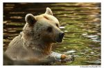 The Water Bear II by TVD-Photography