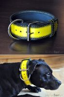 patent yellow dog collar by leatherforfun