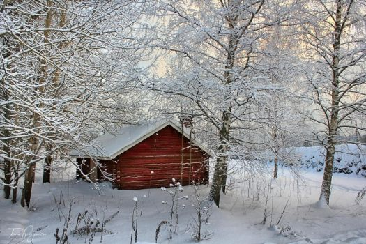 Red shed in winter by Pajunen