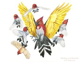 Pokemon Birds - Fletchling and Fletchinder