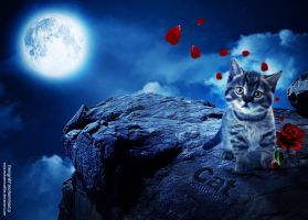 Cat Wallpaper by Mohammad-GFX