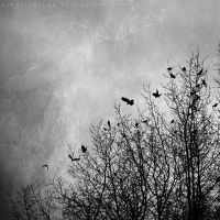 Nevermore by ElyneNoir
