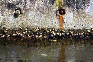 Rust N' Barnacles by ExposeTheBeauty