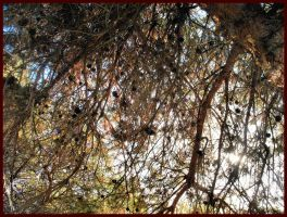 Autumn Branches by grandmajudie