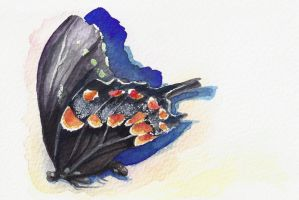 Daily Doodle:  Butterfly by mynti