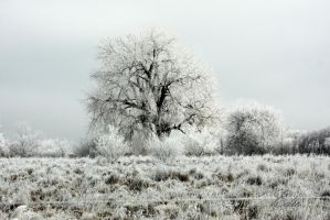 Frosty Morning VI by 1001G