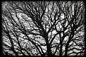 Branch lines by awjay