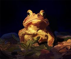 Toad Color Study by sarakuan