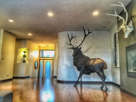 The Stag's Domain by WeirdCityTaxidermy