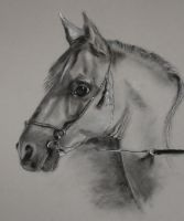 Horse. by hever