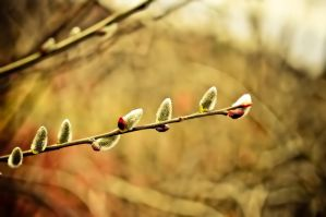 Almost spring by lalylaura