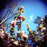 Holga 1 7 Flowers by LDFranklin