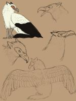Circe Sketchdump by twist-of-fate-16