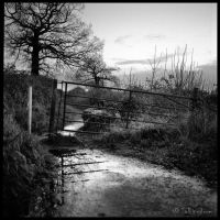 Gate by Talkingdrum
