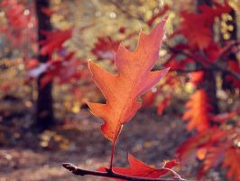 Red oak I by rosaarvensis