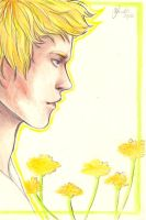 Dandelion in the spring by Hikari-chi