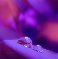 Purple Light by Callu