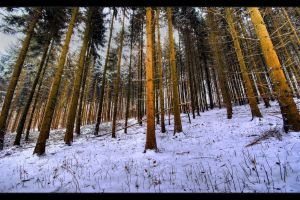 Winter's secrets by JoInnovate