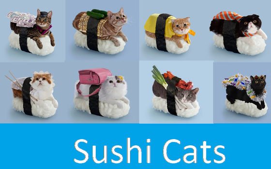 Sushi Cats by boonfish