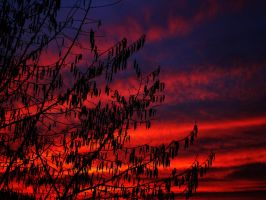 red sunlight stripes by Maribosa