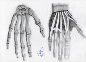 Study of the hand by DrakoWolff