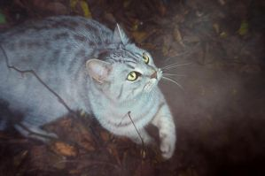 Forest cat. by Juliann4