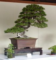 Bonsai by l0neKitsune