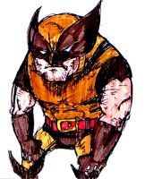 Wolverine from ma scetch book by dinomottaesmaga