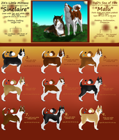 MaluXSinclaire Siberian Husky Litter -OPEN!! by GuardianOfJay