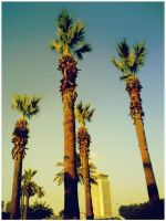 The 4 Palms Friends by mido4design