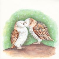 Kissing Owls by IreneShpak