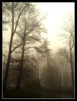 park in the fogg by nieraviel