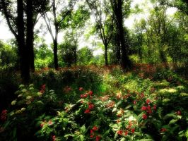 Himalayan Balsam forest by MDGallery