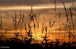 Touch of Gold by bluesgrass