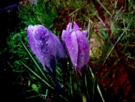 Flower with raindrops by marjol3in