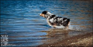 Water Dog iii by XetsaPhoto