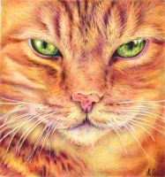 Ginger Cat - ballpoint pen by margaritafelis