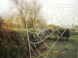 The Spiders' Web by charrlahh