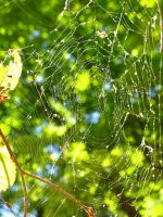 Web's weaved by MtnGirl