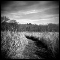 Shaw Nature Reserve. by Duffy01