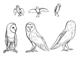 Owl Sketches by Soulphur