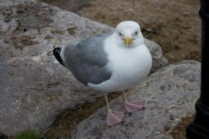 Seagull 3 by joannastar-stock