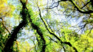 Green Connections by KanaZilla