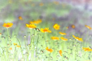 Flowerbed by phoenix1981