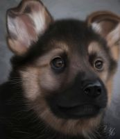 Puppy by karma2001