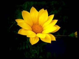 Yellow flower with effects by Liviy22